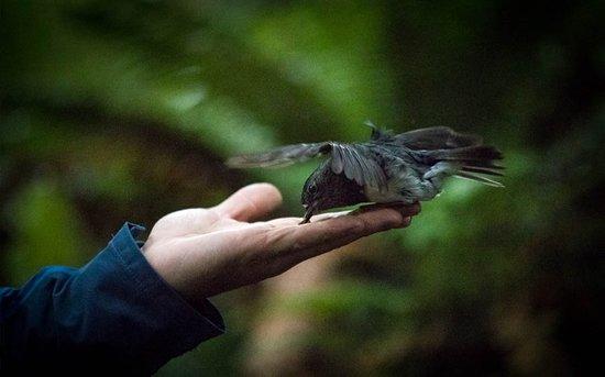 Rotorua Canopy Tours: Hand feeding birds