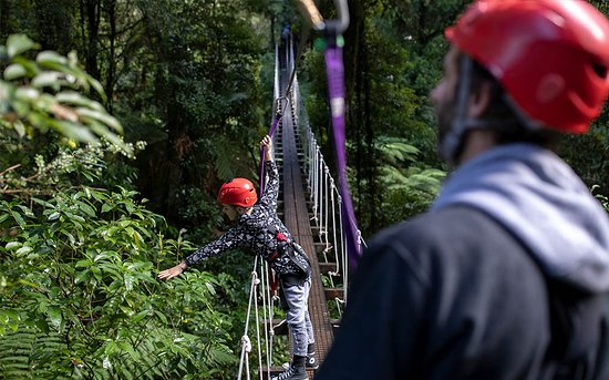 Rotorua Canopy Tours: Swing Birdge fun - Original Canopy Tour