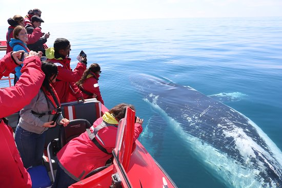 Dunsborough, Australia: The mighty Humpback whale
