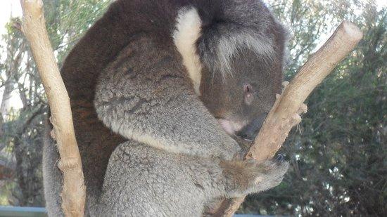 Kyabram, Australien: Relaxed.