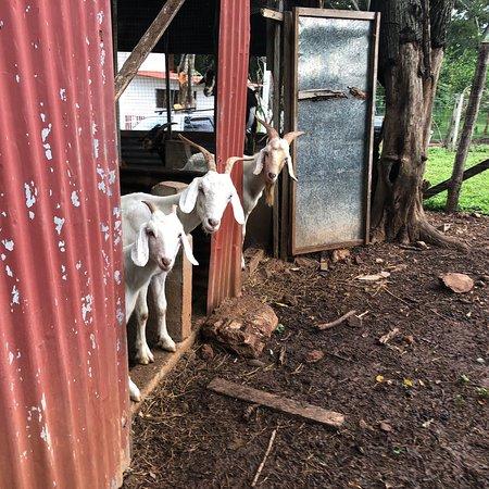 Villareal, Costa Rica: photo2.jpg