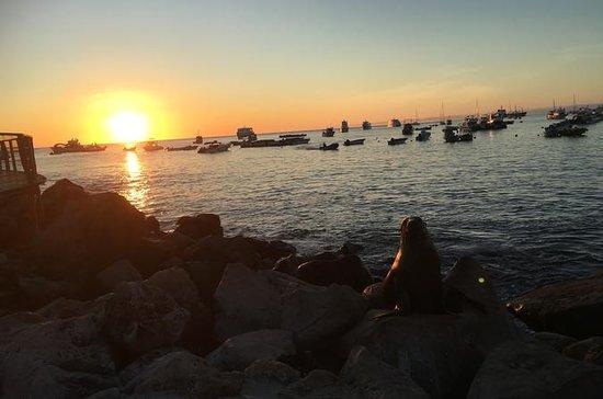 8 Tage Galapagos-Inselhoppingtour