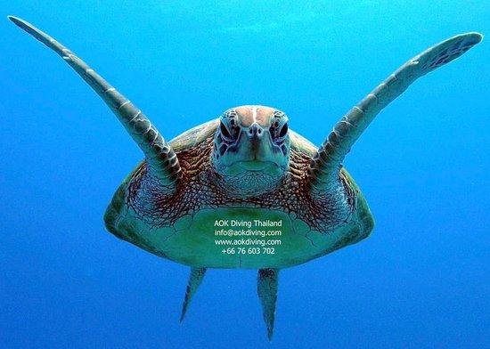 AOK Diving
