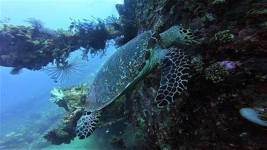 La Bila Dive Resort Amed: Advanced Open Water Course with PADI  Bila Dive Resort in Amed Bali