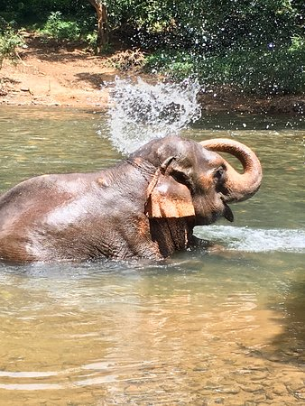 Kulem, Indien: Elephant bathing in the river