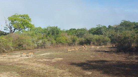 Leopard Trails Camp Wilpattu Sri Lanka Foto