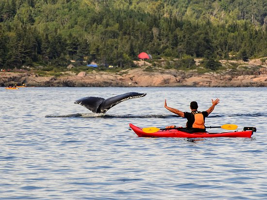 Quebec, Canada: Kayaking with the whales,St. Lawrence River, Manicouagan