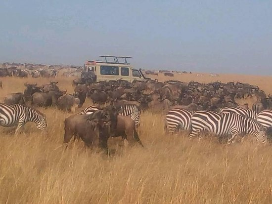 OKOA AFRICA TOURS