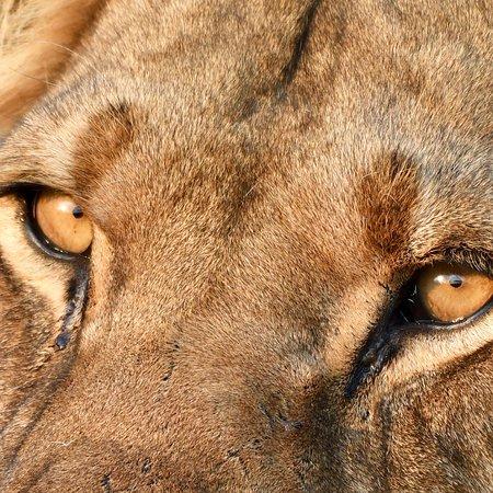 Central Kalahari Game Reserve, Μποτσουάνα: Authentiek Safari