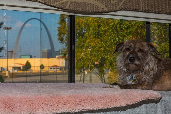 Casino Queen: The view from our RV living room.