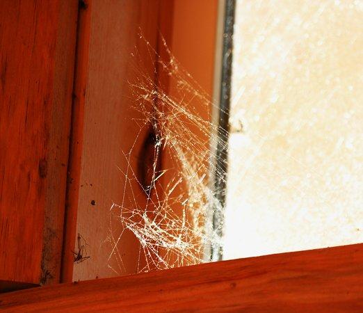 Hackensack, MN: Upper sills cob-webby!