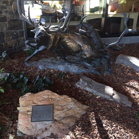 Rocky Mountain Elk Foundation صورة فوتوغرافية
