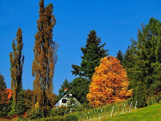 Glanz an der Weinstrasse, النمسا: Glanzer Weintour mit Weinkulturrunde