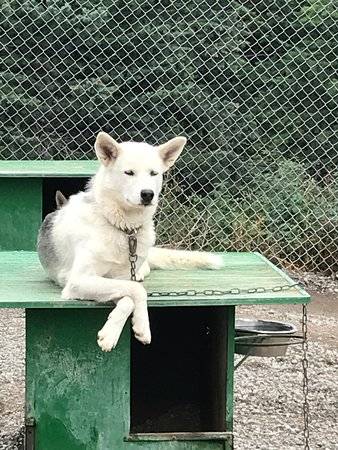 Snowy Owl Sled Dog Tours: My favorite pose