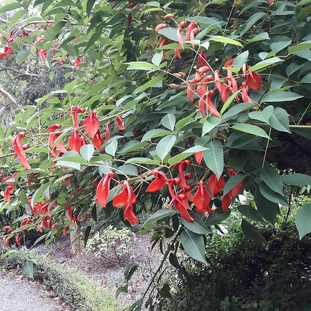 Greater Wellington, Nova Zelândia: Hermosos Jardines Botánicos
