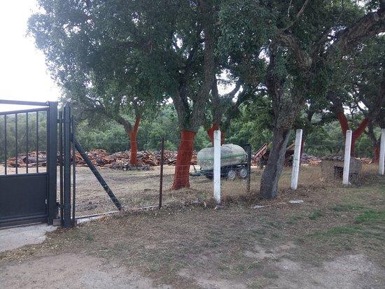 Montecorto, สเปน: received_618054681925912_large.jpg