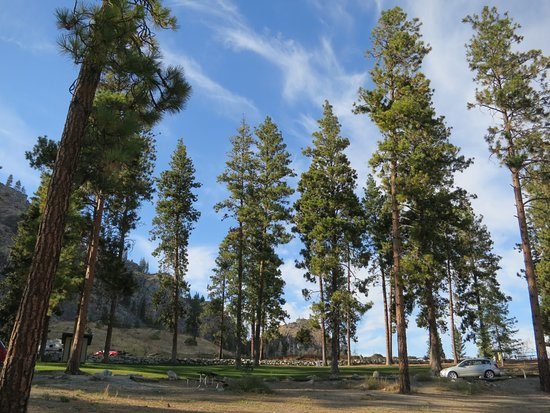 Pateros, WA: camp under the pines