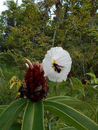 El Limon, Δομινικανή Δημοκρατία: Flores y frutos, hacen a la vida de abejones, abejas y mariposas