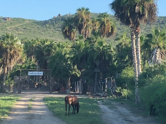 Todos Santos, Mexico: our farm