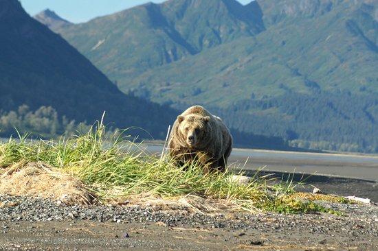Parco nazionale e Riserva del Lago Clark, AK: Bear who had just woken up