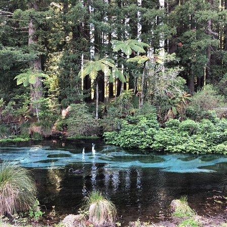 Hamurana, Selandia Baru: photo4.jpg