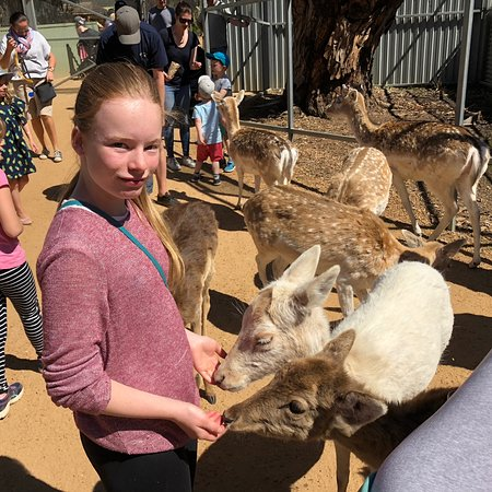 Halls Gap Zoo: photo0.jpg