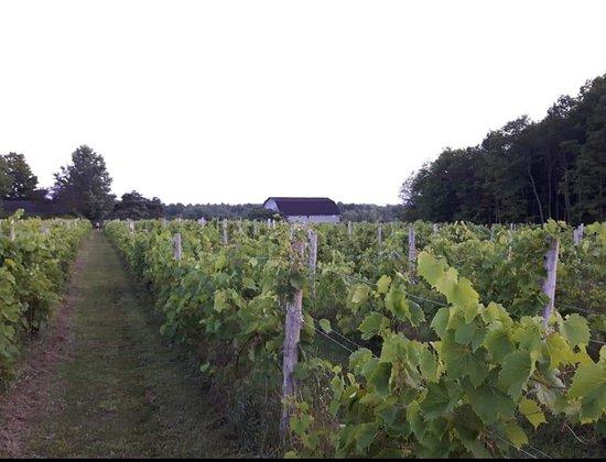 Vignoble Bromont - Domaine Vitis