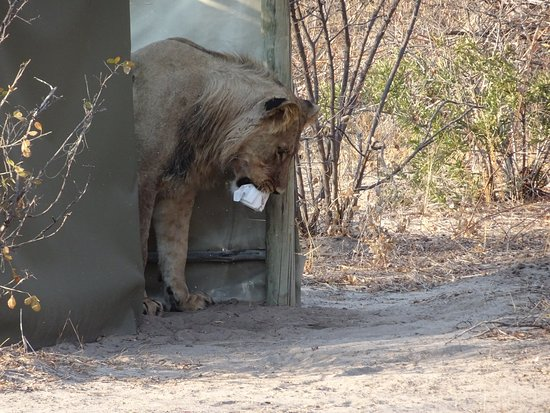 Central Kalahari Game Reserve Φωτογραφία