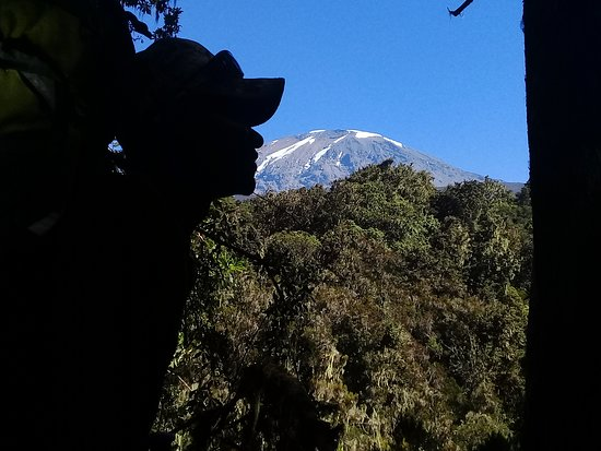Frozen Peak Adventures: Kilimanjaro view from the forest.