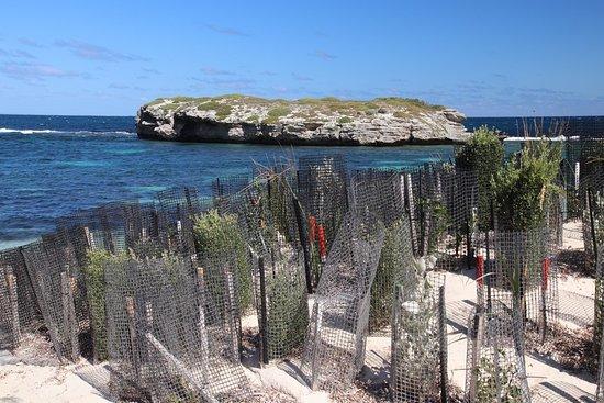 Rottnest Island, Australia: Attractive!