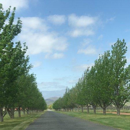Фотография Springfield Estate Winery
