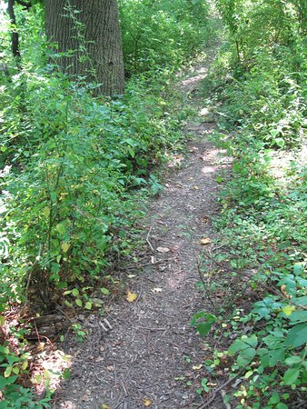 Lebanon, NJ: RoundValleynorthandwestnorthJersey path shad elight