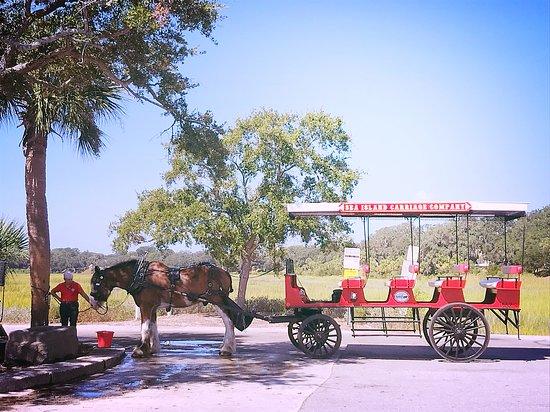 Sea Island Carriage Company: Mrs Kathy & Jasper