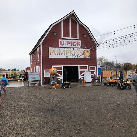 Idaho Falls, ID : Great place for kids train rides ,slides and the best part. Is you get to pick your own pumpkins