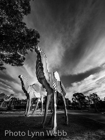 นอร์สแมน, ออสเตรเลีย: Tin Camels