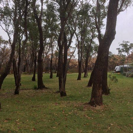 Lemon Tree Passage, Australie : photo0.jpg