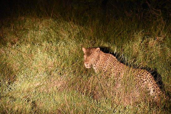 iSimangaliso Wetland Park, แอฟริกาใต้: NIK_1747_large.jpg