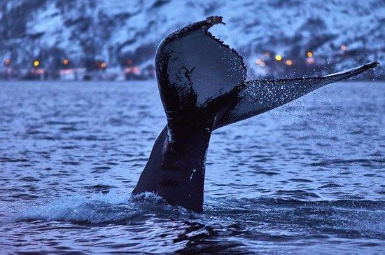 Observation des baleines dans Magic...