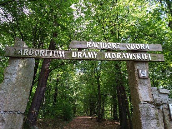Aboretum Bramy Morawskiej