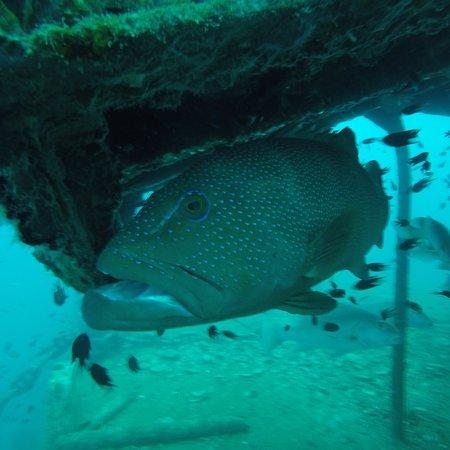 Great Dive Centre