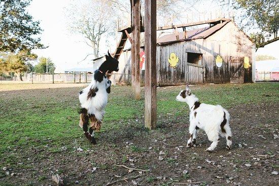 Lucky Ladd Farms