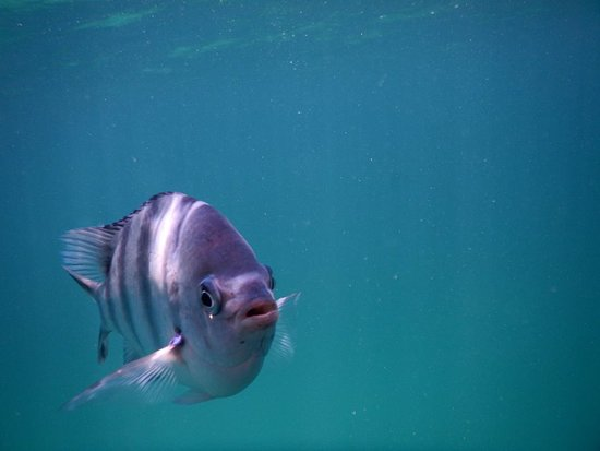 Gerry's Private Charters: Great snorkeling