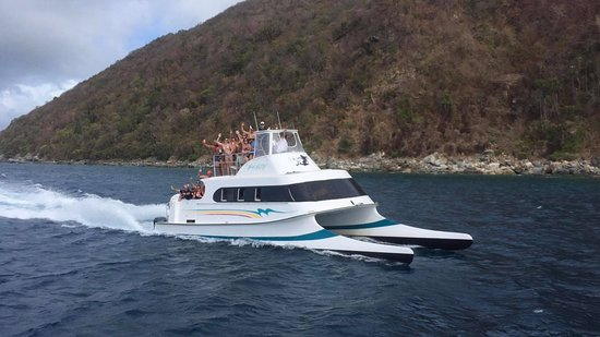 Calypso Charters Bad Kitty