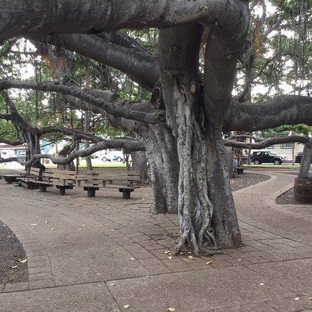 Banyan Tree Park: photo6.jpg