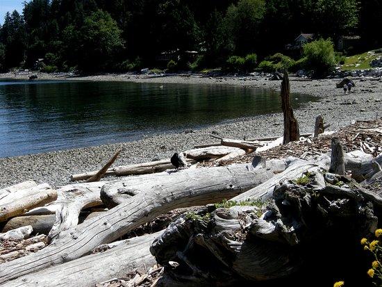Halfmoon Bay, Canada: Driftwood at Sargeant Bay Provincial Park