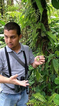 Reserva Bosque Nuboso Santa Elena: Everth, our exceptional guide