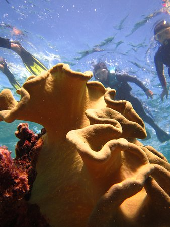 Poindimie, Nowa Kaledonia: Que du bonheur !