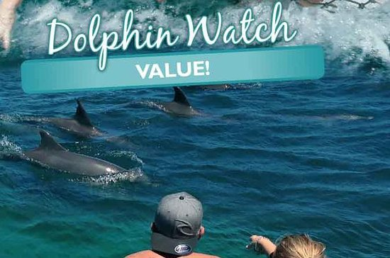 Port Stephens Dolphin Watch Cruise