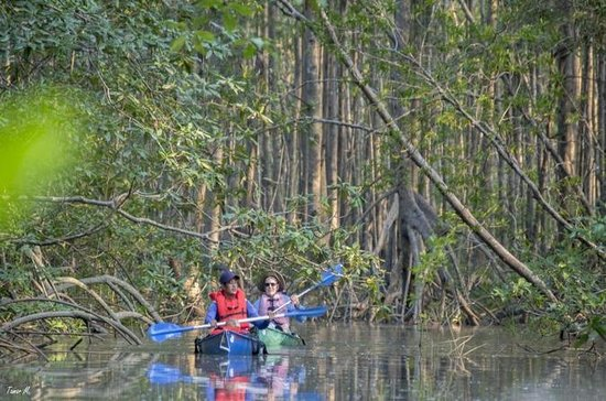 Platanares WR Mangrove Exploration by...