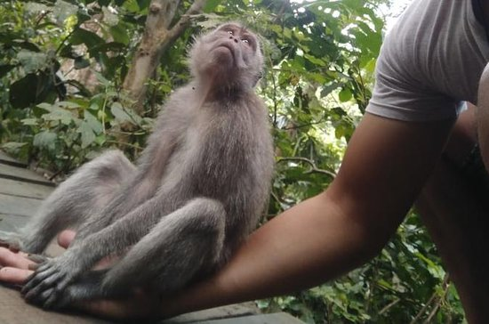 Monkey Forest, Tegallalang Rice